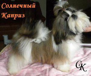 http://s9.uploads.ru/t/fesuB.jpg