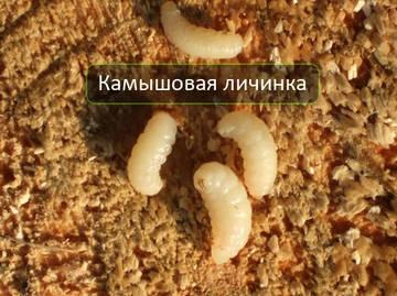 http://s9.uploads.ru/t/fmMFJ.jpg