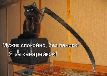 http://s9.uploads.ru/t/g9zp8.jpg