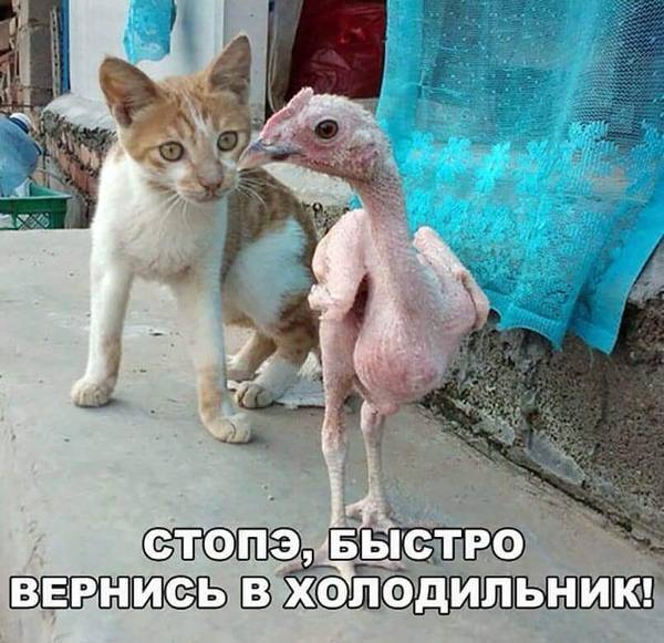 http://s9.uploads.ru/t/gAPJ7.jpg