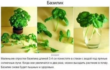 http://s9.uploads.ru/t/gLd0l.jpg