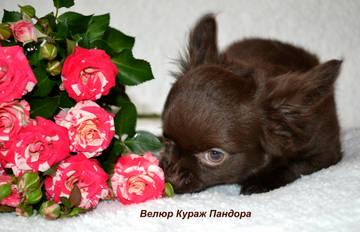 http://s9.uploads.ru/t/jk0Mz.jpg