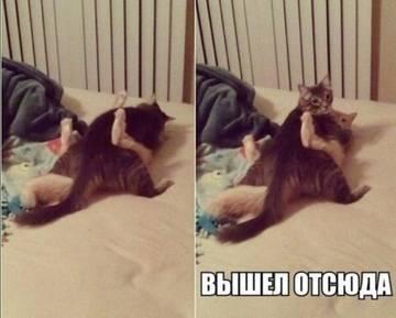 http://s9.uploads.ru/t/k2MEq.jpg