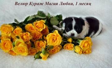 http://s9.uploads.ru/t/k3NHq.jpg