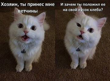 http://s9.uploads.ru/t/k6BxL.jpg