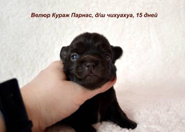 http://s9.uploads.ru/t/kxaPE.jpg