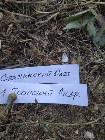 http://s9.uploads.ru/t/lIv1S.jpg