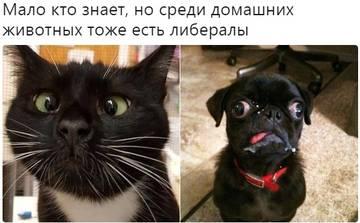 http://s9.uploads.ru/t/mxhZD.jpg