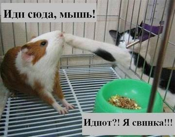 http://s9.uploads.ru/t/naI2y.jpg