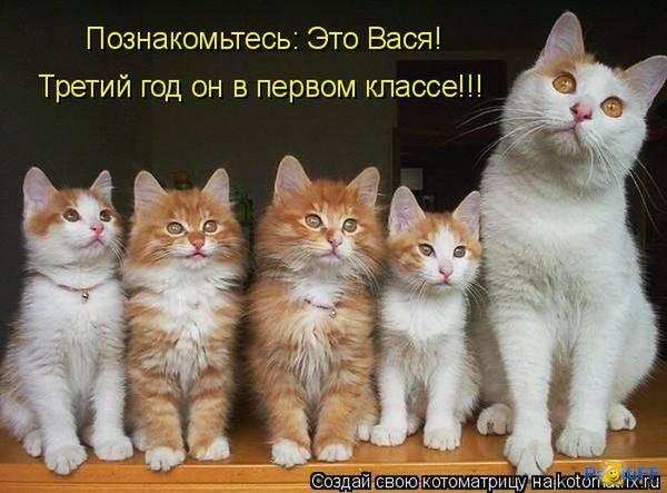 http://s9.uploads.ru/t/p0lFV.jpg