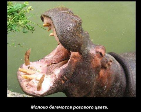 http://s9.uploads.ru/t/pTnBr.jpg