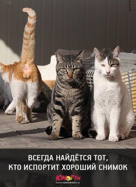 http://s9.uploads.ru/t/qPohZ.jpg