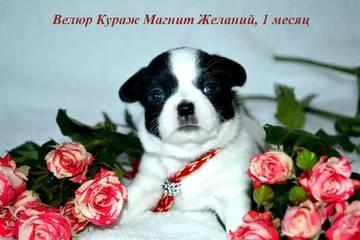 http://s9.uploads.ru/t/qWoCd.jpg