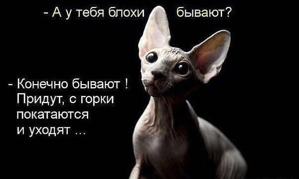 http://s9.uploads.ru/t/rxS7B.jpg
