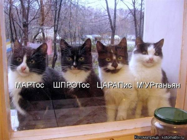 http://s9.uploads.ru/t/tLFJz.jpg