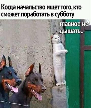 http://s9.uploads.ru/t/u6hlP.jpg