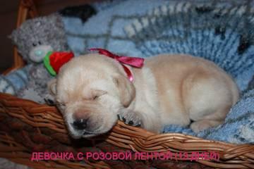 http://s9.uploads.ru/t/uKJRk.jpg
