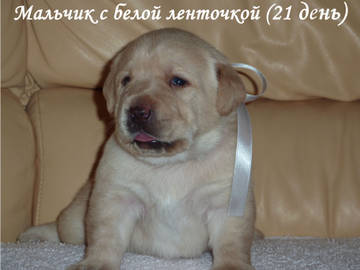 http://s9.uploads.ru/t/uNMHw.jpg