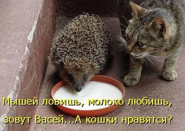 http://s9.uploads.ru/t/vBnfS.jpg