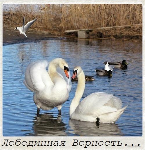 http://s9.uploads.ru/t/vLJHD.jpg
