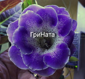 http://s9.uploads.ru/t/vxJ62.jpg