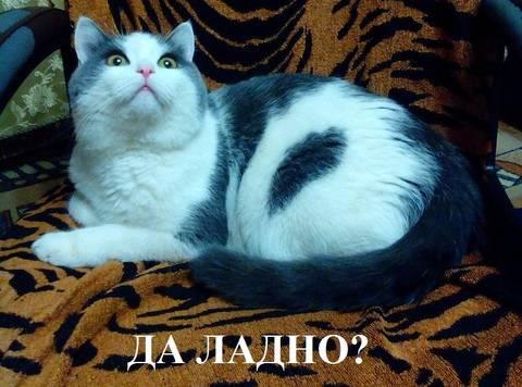 http://s9.uploads.ru/t/wKWGX.jpg