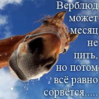 http://s9.uploads.ru/t/x5DBm.jpg