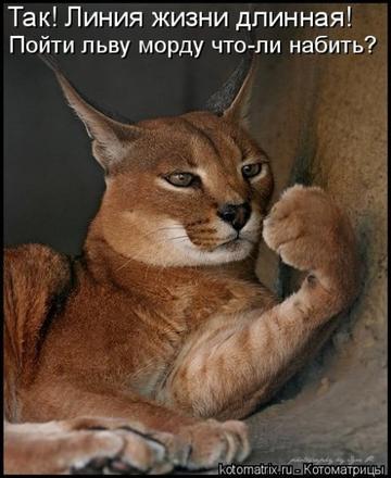 http://s9.uploads.ru/t/xc97t.png