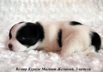 http://s9.uploads.ru/t/y6dvK.jpg