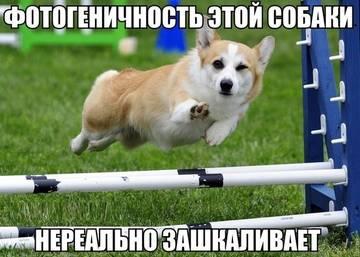 http://s9.uploads.ru/t/y8lNf.jpg