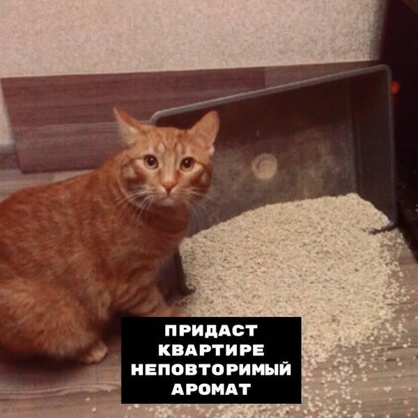 http://s9.uploads.ru/t/ySF8M.jpg
