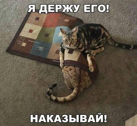 http://s9.uploads.ru/t/yUMaR.jpg
