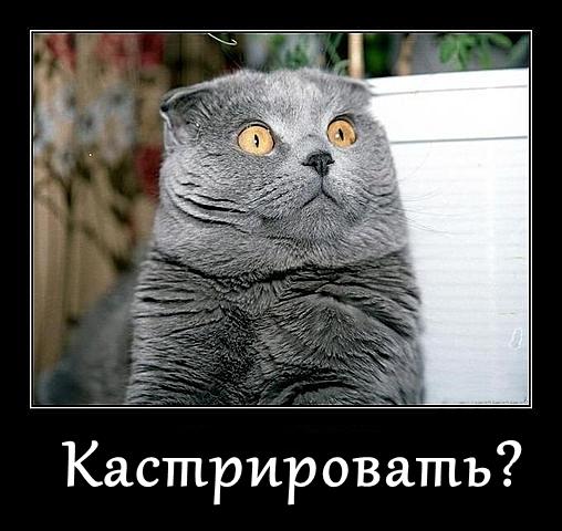 http://s9.uploads.ru/NCqU3.jpg