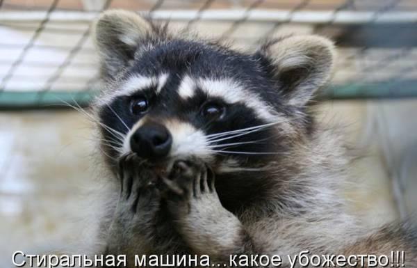 http://s9.uploads.ru/t/0us79.jpg