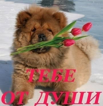 http://s9.uploads.ru/t/90CzF.jpg