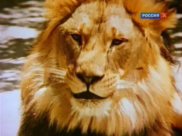 http://s9.uploads.ru/t/Bidl0.jpg