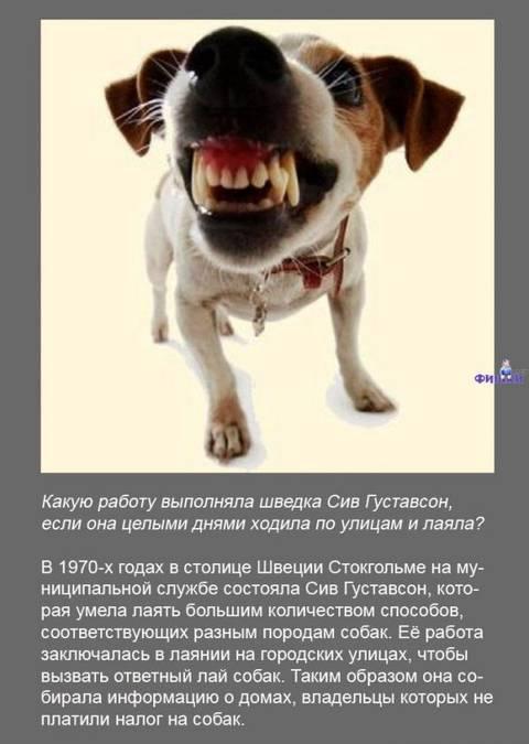 http://s9.uploads.ru/t/OjoJq.jpg
