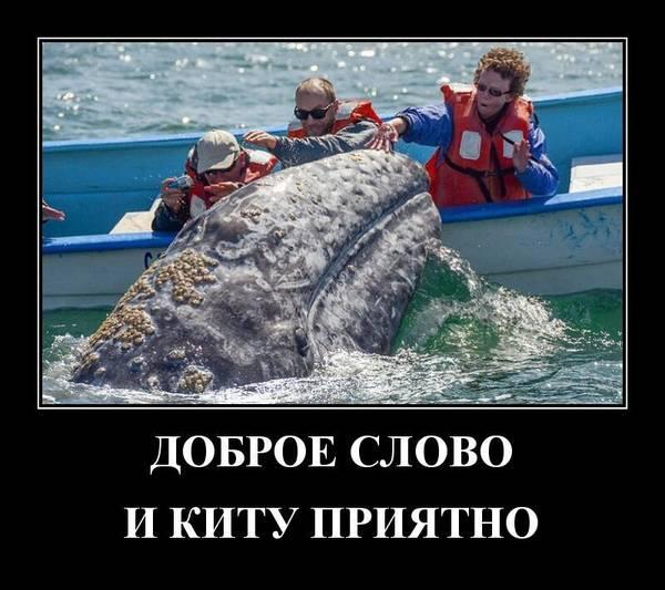 http://s9.uploads.ru/t/SE2jm.jpg