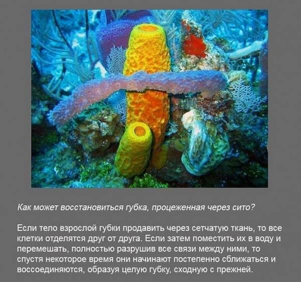 http://s9.uploads.ru/t/T7Kr2.jpg