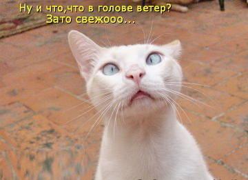 http://s9.uploads.ru/t/mBjrV.jpg
