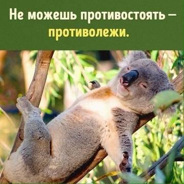 http://s9.uploads.ru/t/mnwIg.jpg