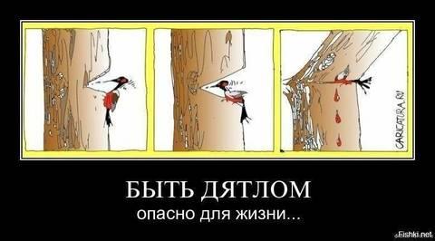 http://s9.uploads.ru/t/wd3fs.jpg
