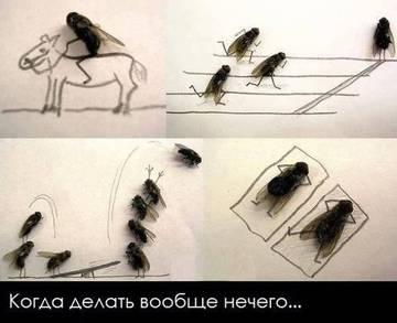 http://s9.uploads.ru/t/x1b2P.jpg