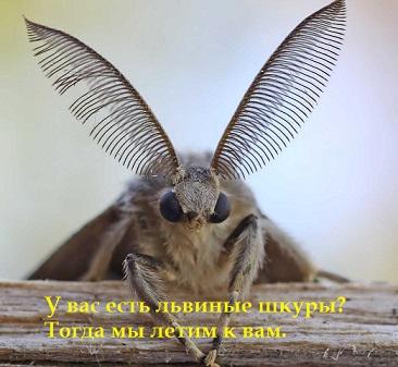 http://s9.uploads.ru/wiV9I.jpg
